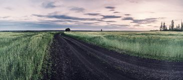 Landwirtschaftliche Landschaft der Weinlese mit Weizenfeld Lizenzfreie Stockfotos