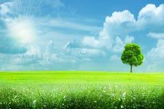 Landwirtschaftliche Landschaft des abstrakten Sommers Stockbild
