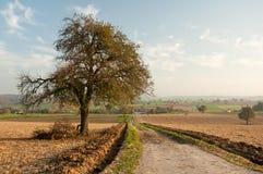 Landwirtschaftliche Landschaft des Herbstes Stockfoto