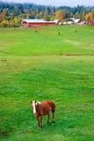 Landwirtschaftliche Landschaft des Herbstes, Pferdenbauernhof, Washington Lizenzfreie Stockbilder