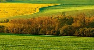 Landwirtschaftliche Landschaft des schönen Frühlinges Stockbilder
