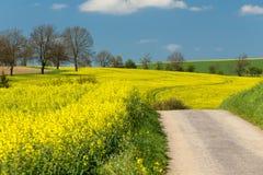 Landwirtschaftliche Landschaft des schönen Sommers Lizenzfreies Stockfoto