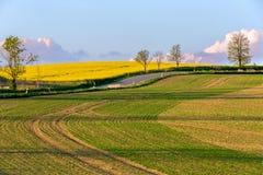 Landwirtschaftliche Landschaft des schönen Sommers Lizenzfreies Stockbild