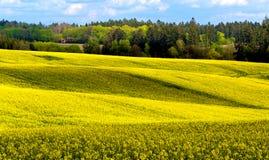 Landwirtschaftliche Landschaft des schönen Sommers Lizenzfreie Stockfotos