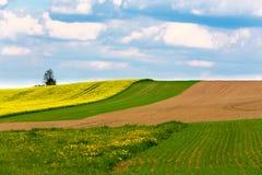 Landwirtschaftliche Landschaft des schönen Sommers Lizenzfreie Stockfotografie