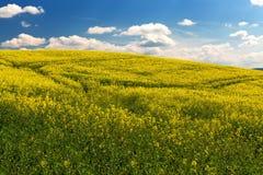 Landwirtschaftliche Landschaft des schönen Sommers Stockbild