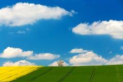 Landwirtschaftliche Landschaft des schönen Sommers Lizenzfreie Stockbilder