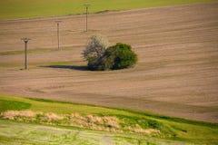 Landwirtschaftliche Landschaft des schönen Sommers Stockfotografie