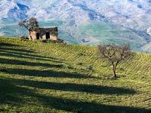 Landwirtschaftliche Landschaft eines Feldes mit einer alten Steinhütte lizenzfreies stockbild