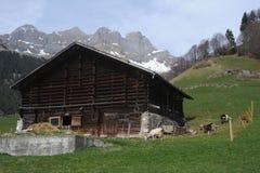Landwirtschaftliche Landschaft in Engelberg Stockfotos