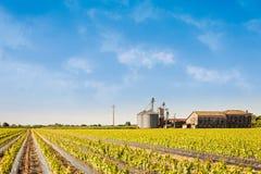 Landwirtschaftliche Landschaft Feld auf junger Rebe Silos und verlassener Bauernhof Lizenzfreie Stockbilder