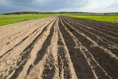 Landwirtschaftliche Landschaft, gepflogenes Feld Lizenzfreies Stockfoto