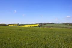 Landwirtschaftliche Landschaft im Frühjahr Stockbild