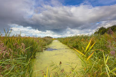 Landwirtschaftliche Landschaft mit Abzugsgraben und Entengrütze in Friesland, Netz Stockfotos