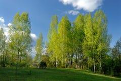Landwirtschaftliche Landschaft mit Birken Lizenzfreies Stockbild