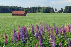 Landwirtschaftliche Landschaft mit Blumen in Finnland Lizenzfreie Stockfotos