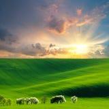 Landwirtschaftliche Landschaft mit grünem Feld Stockbild