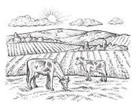 Landwirtschaftliche Landschaft mit Kühen Vektorweinlesebauernhof Stockfotos