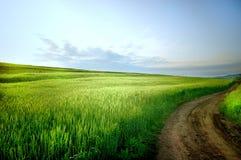 Landwirtschaftliche Landschaft mit Straße Lizenzfreie Stockbilder