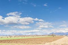 Landwirtschaftliche Landschaft Mit Traktorpflug ein Feld Lizenzfreie Stockfotos