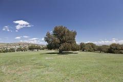 Landwirtschaftliche Landschaft mit Wacholderbusch Stockfotografie