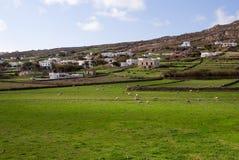 Landwirtschaftliche Landschaft mit Weide und weiden lassen Schafen Stockfoto