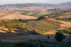 Landwirtschaftliche Landschaft mit Weinbergen und Gärten Stockbild