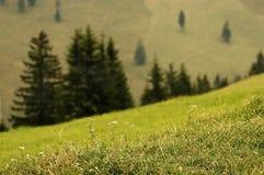 Landwirtschaftliche Landschaft mit wilder Wiese und Kiefernholz Stockbilder