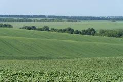Landwirtschaftliche Landschaft in Podolien-Region von Ukraine lizenzfreie stockfotos