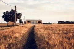 Landwirtschaftliche Landschaft in Provence, Frankreich Stockfotos
