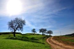 Landwirtschaftliche Landschaft, Straße und Baum Stockfotografie