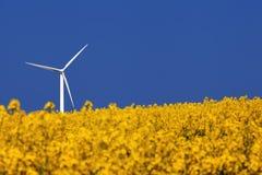 Landwirtschaftliche Landschaft Windturbine und Rapssamenfeld Stockfoto
