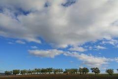 Landwirtschaftliche Landschaft Zwischen Apulien und Basilikata: Olivenhain auf gepflogenem Feld Italien Stockfotos