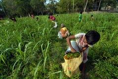 Landwirtschaftliche Landwirtschaft Lizenzfreies Stockfoto