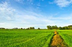 Landwirtschaftliche Methode durch Felder mit Weizen lizenzfreie stockfotografie