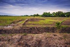 Landwirtschaftliche Nutzfläche in Nord-Thailand Stockfotografie
