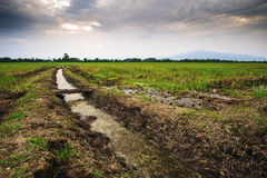 Landwirtschaftliche Nutzfläche in Nord-Thailand Lizenzfreies Stockbild