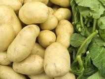 Landwirtschaftliche Produkte VI lizenzfreies stockbild