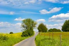 Landwirtschaftliche Rapsfelder und Wiesen mit gebogenem Weg, ländliche Landschaft im Frühjahr Lizenzfreie Stockfotografie