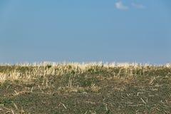 Landwirtschaftliche Sommerlandschaft Stockbild