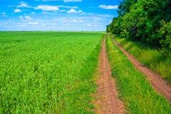 Landwirtschaftliche Sommerlandschaft Stockbilder