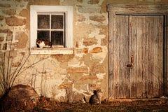 Landwirtschaftliche Stall wirh Katzen, die in die Sonne legen stockfotos