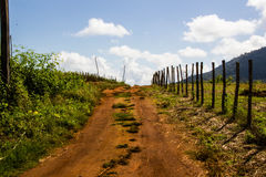 Landwirtschaftliche Straße Lizenzfreies Stockbild