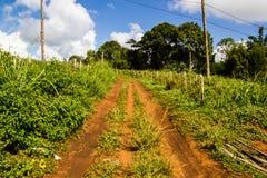 Landwirtschaftliche Straße Lizenzfreie Stockfotos