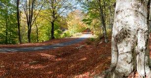 Landwirtschaftliche Straße des Herbstes Stockfotos