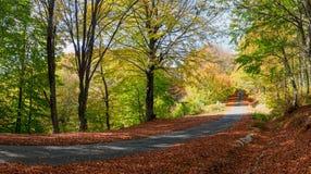Landwirtschaftliche Straße des Herbstes Lizenzfreie Stockfotografie