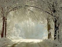 Landwirtschaftliche Straße des Winters durch die gefrorenen Bäume Stockbild
