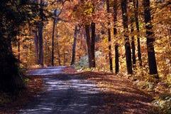Landwirtschaftliche Straße durch Herbstfarben Lizenzfreie Stockbilder