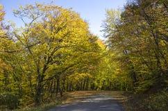 Landwirtschaftliche Straße im Wald Stockbilder