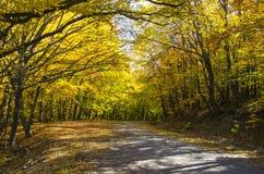 Landwirtschaftliche Straße im Wald Lizenzfreies Stockfoto